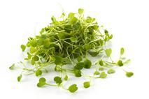 Micro Salad Rocket