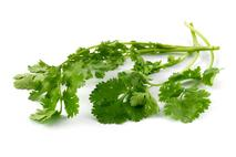 Herb Bunched Coriander