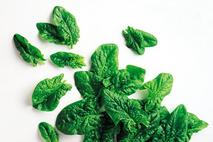 Ardo Loose Leaf Spinach