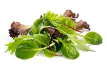 Premium Baby Leaf Salad