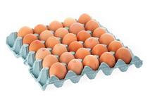 Fresh Medium Eggs               30 Dozen