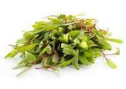 Salad & Herbs