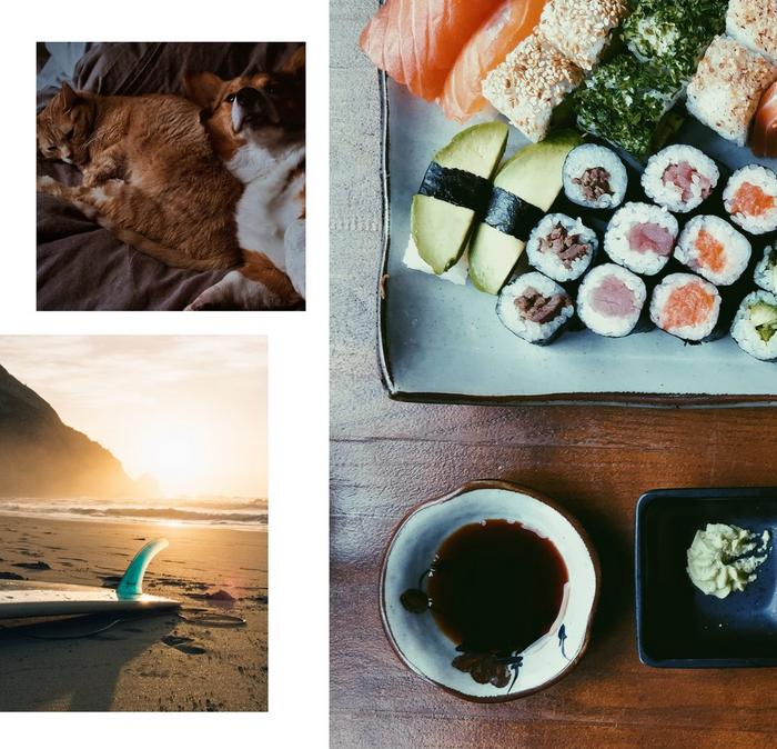 Collage of images showing a cat and dog, sushi and surfing.