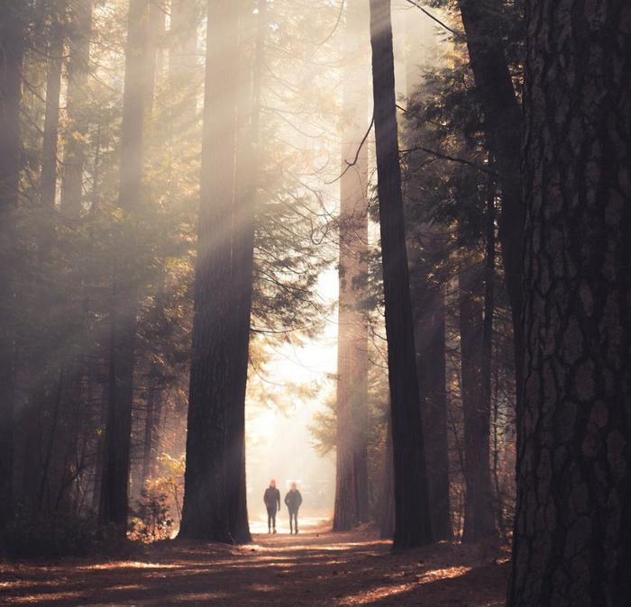 Two people walking through the forest with sun rays beaming through the trees.