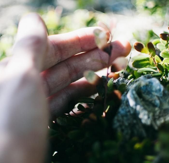 A person's hand touching some green leaves.