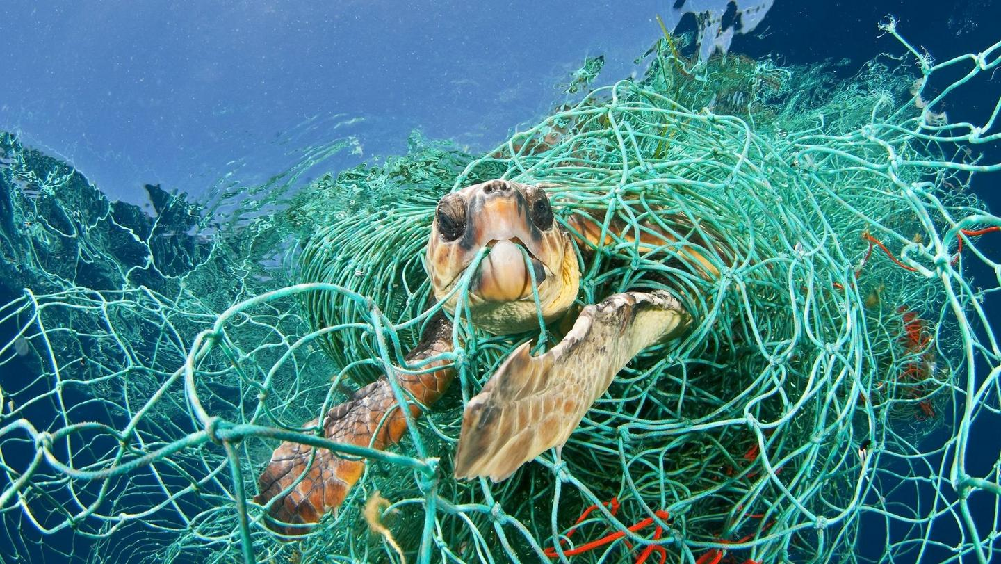 A sea turtle caught up in a ghost fishing net
