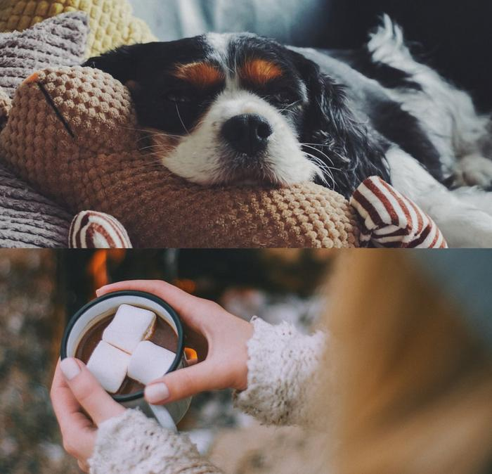 A cute dog resting its head on a cushion, and a woman wraps her hands around a mug of hot chocolate with marshmallows.