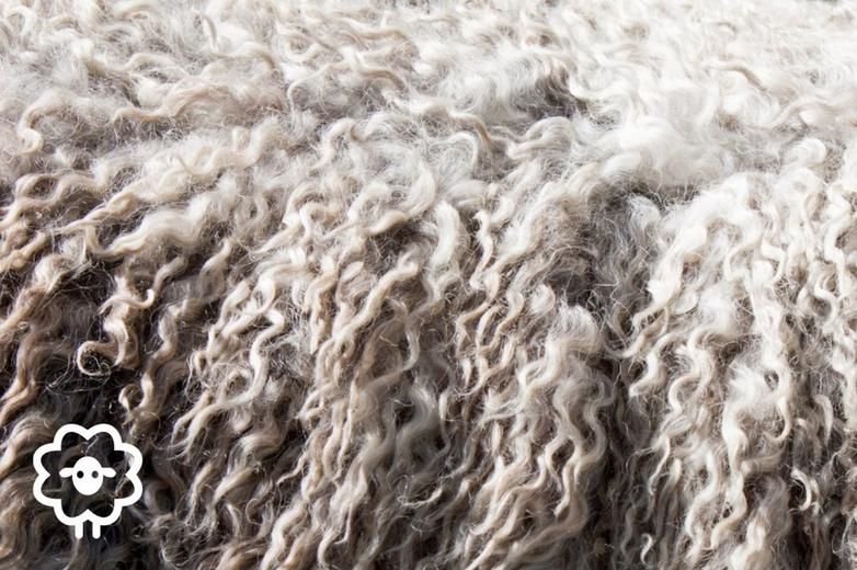 Close up of sheep wool