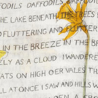 Daffodils Poem Print Scarf White