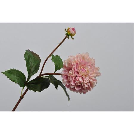 Dahlia spray flower