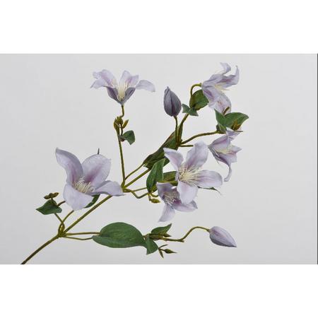 Clematis spray flower