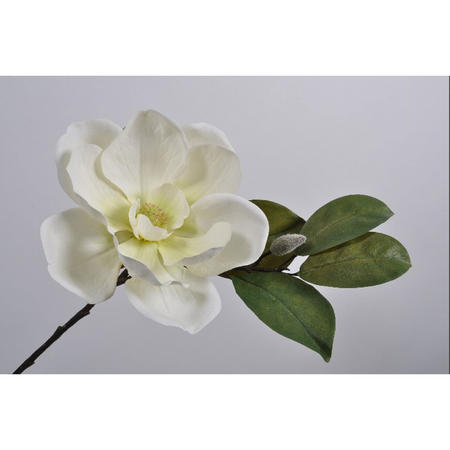 Magnolia spray stem