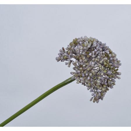 Allium Spray Blue