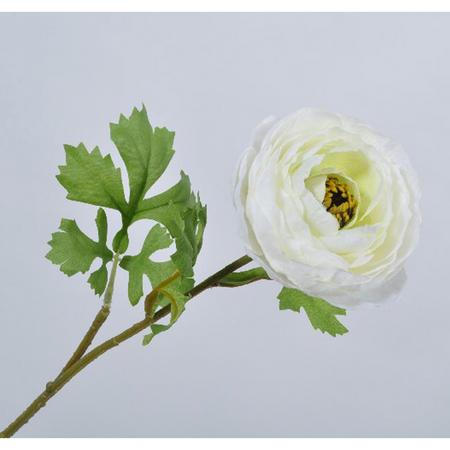 Ranunculus Stem White