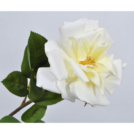 Rose Stem Yellow Light