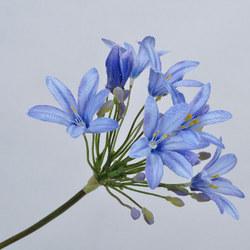 Agapanthus Stem Blue
