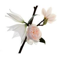 Mon Paris Parfum Floral