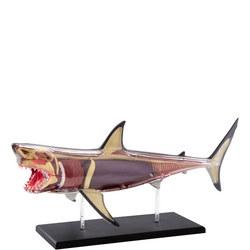 4D Shark Anatomy Kit