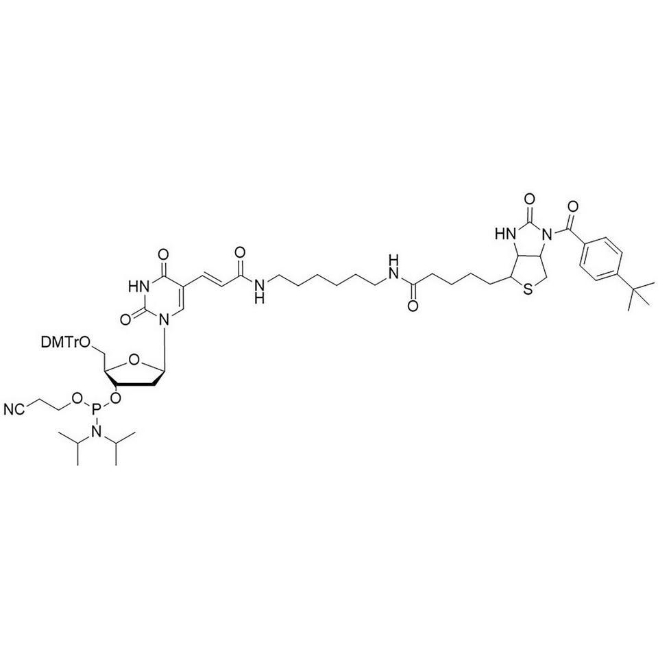 Biotin C6 T Amidite (TBB)