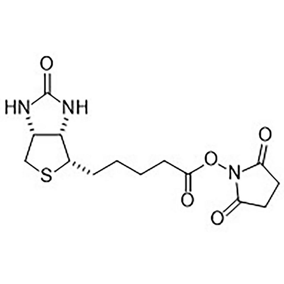D-(+)-Biotin N-Hydroxysuccinimide Ester