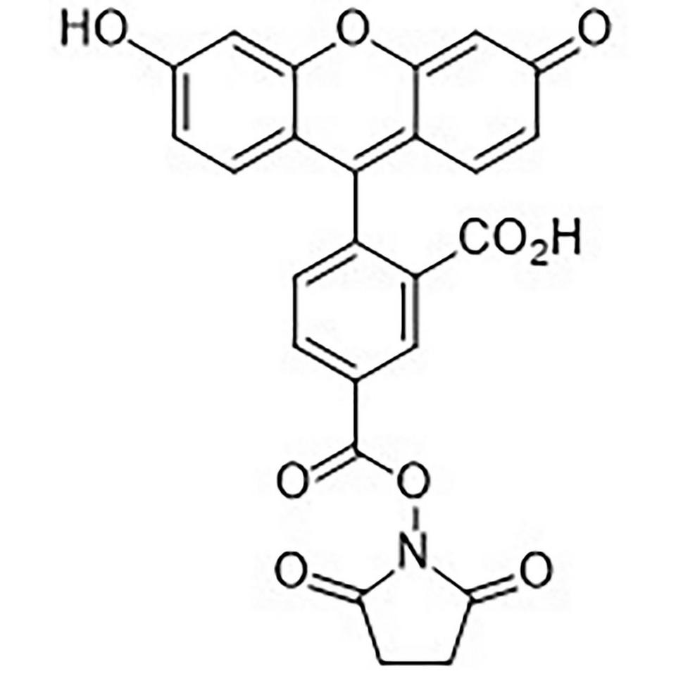 5-Carboxyfluorescein N-Hydroxysuccinimide Ester