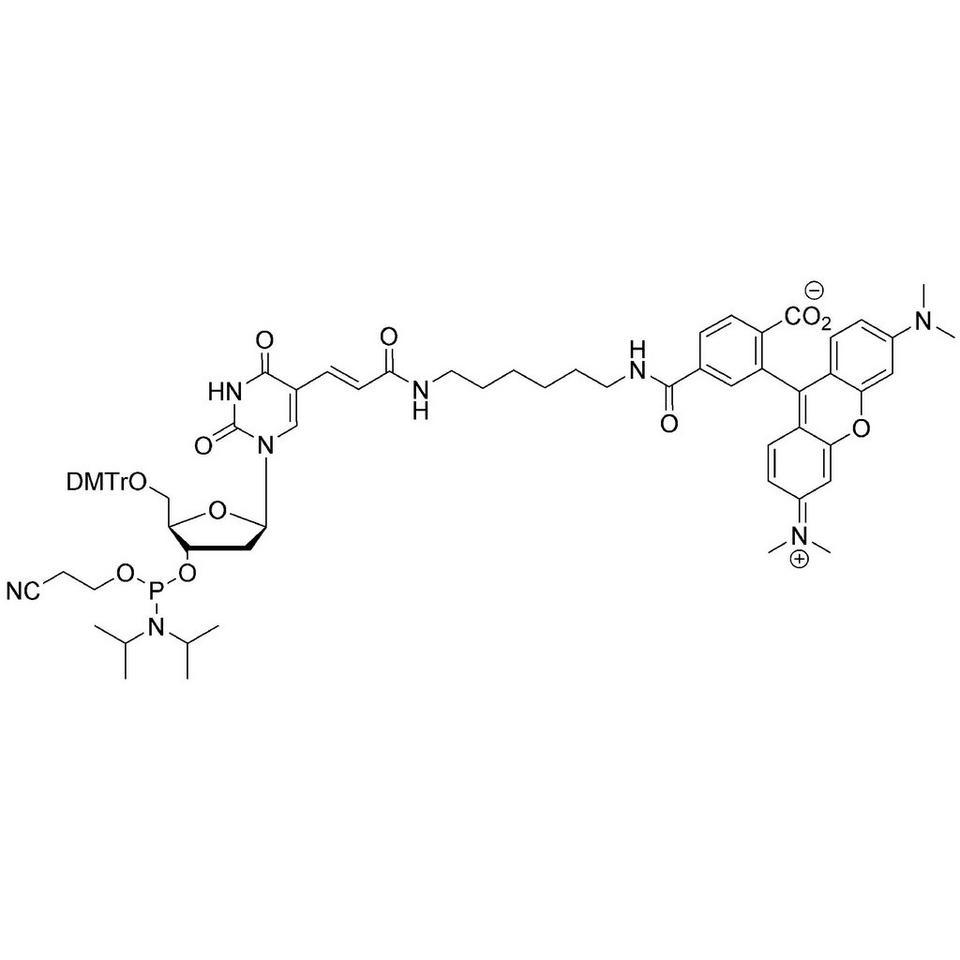 TAMRA-dT CE-Phosphoramidite