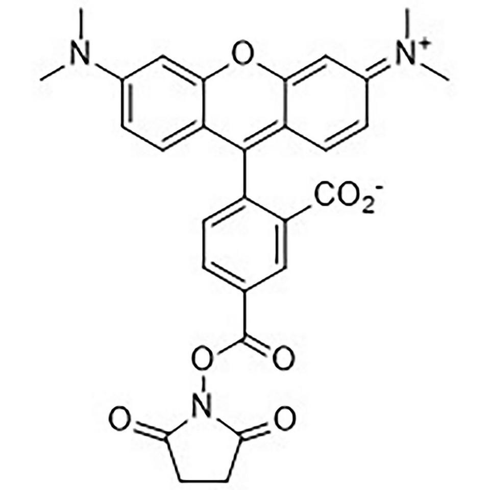 5-Carboxytetramethylrhodamine N-Hydroxysuccinimide Ester
