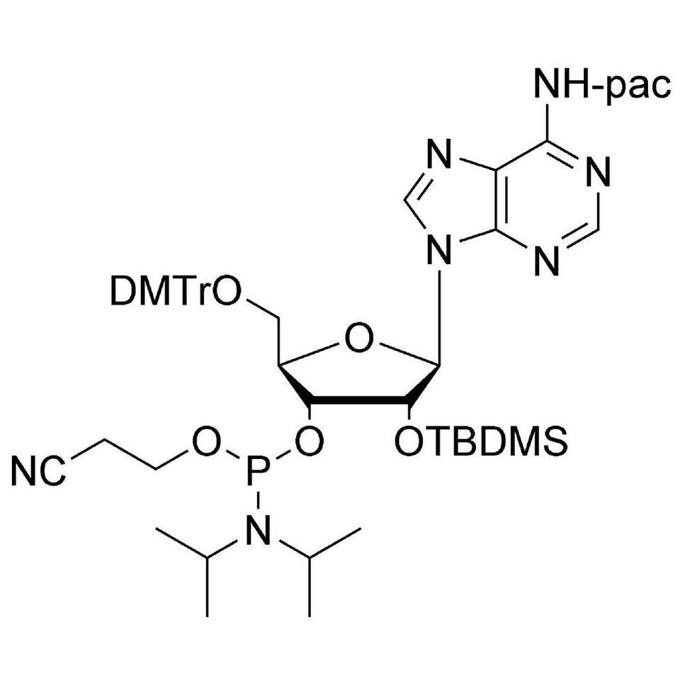 rA (Pac) CE-Phosphoramidite