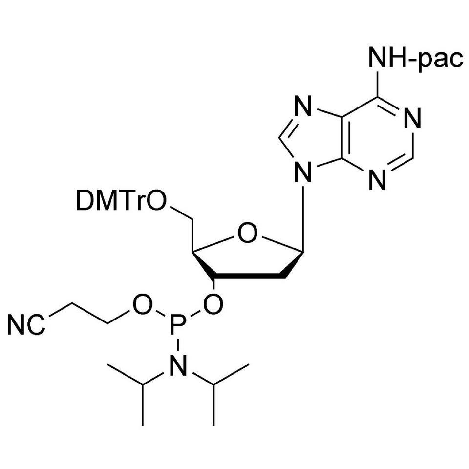 dA (Pac) CE-Phosphoramidite