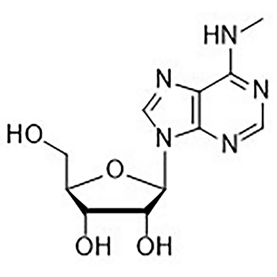 N6-Methyladenosine