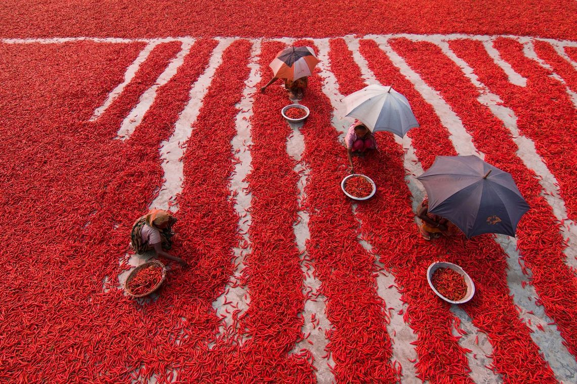 Chilli pickers in the Bogra district of Bangladesh, captured by Azim Khan Ronnie on 12 February 2017 on a Canon EOS 7D Mark II.
