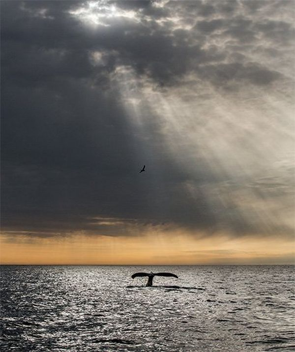 A whale's tail slips into the sea, with golden light in the sky.
