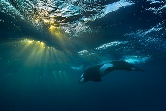 Directing the elements: Audun Rikardsen's killer (whale) shot