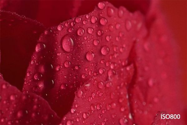 A close-up of a petal on the red rose, with droplets of water.