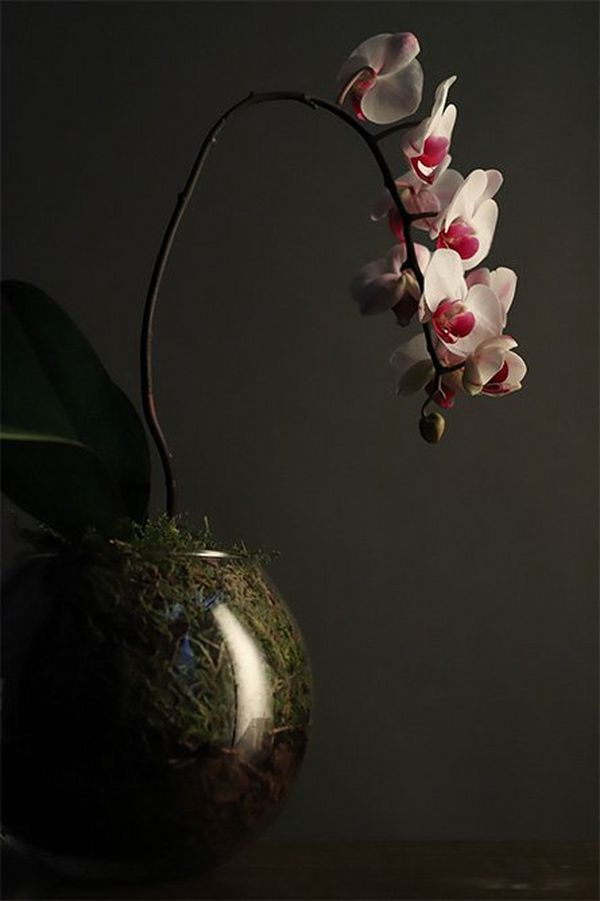 A vase with a pink and white orchid is placed in front of a grey wall, in low light.