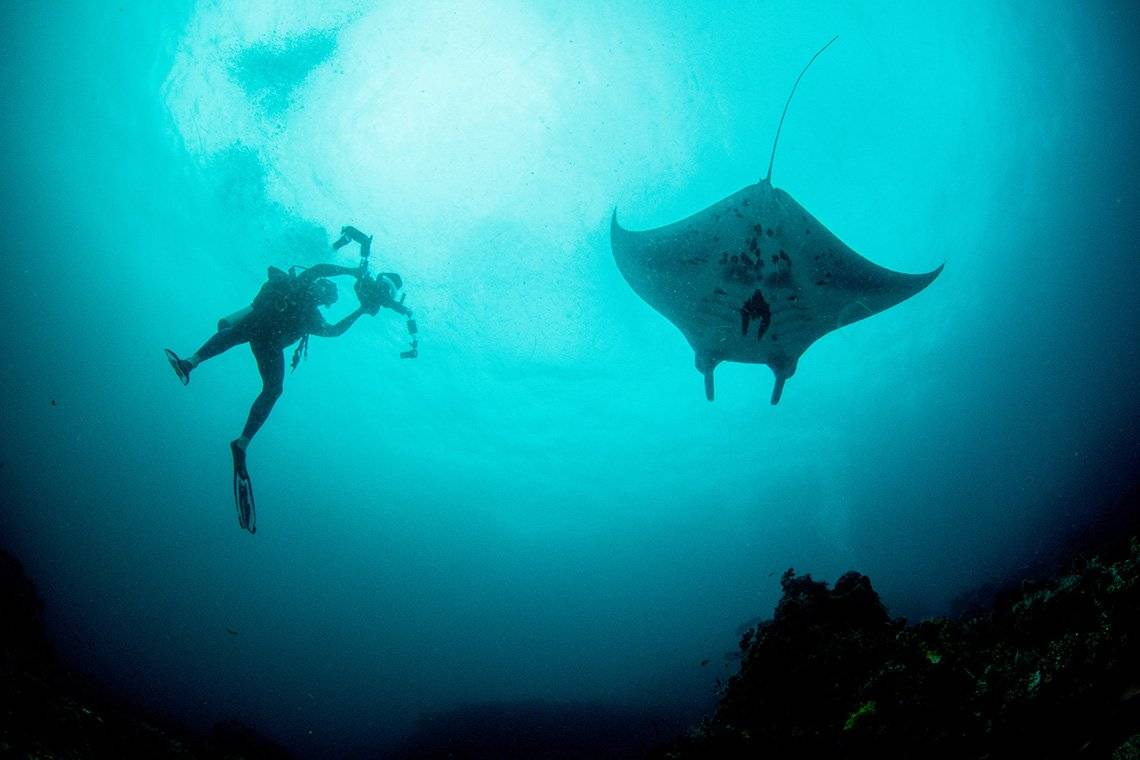 Fergus Kennedy dives next to a reef manta ray. He wears diving gear and holds a camera in an underwater housing to film the ray.