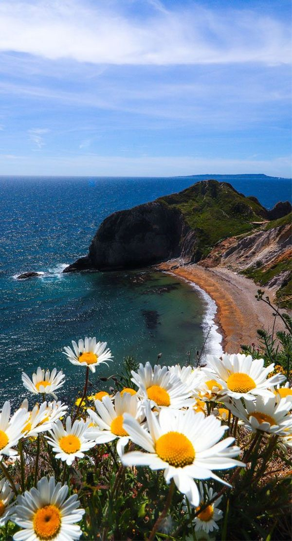 The beach and sea, taken from a clifftop with large daisies in the foreground.