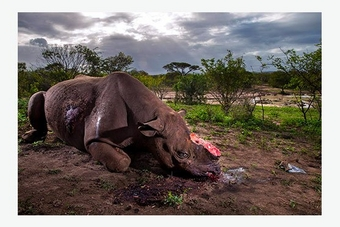 Nature, first prize stories - Brent Stirton