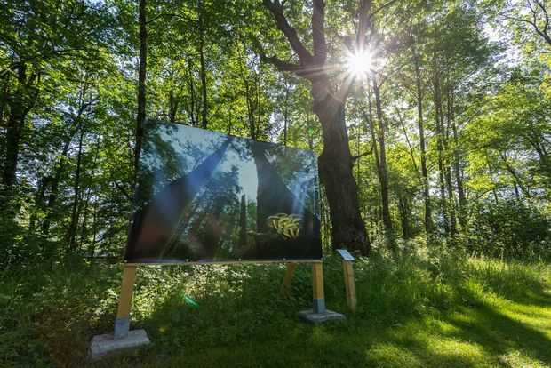 Wildlife photos by Christine Sonvilla and Marc Graf on display in an outdoor exhibition in a forest.