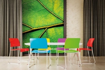 Five coloured chairs surround a table with a printed leaf on the wall behind