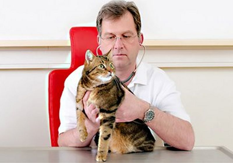 Dr Andreas Kosztolich holds a cat