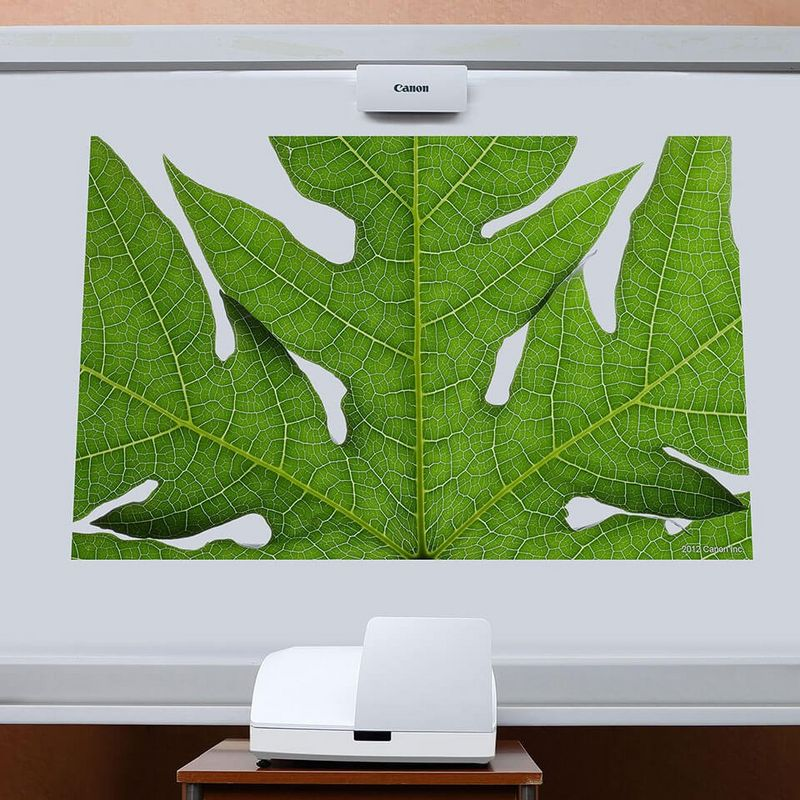Close up shot of leaf on a screen