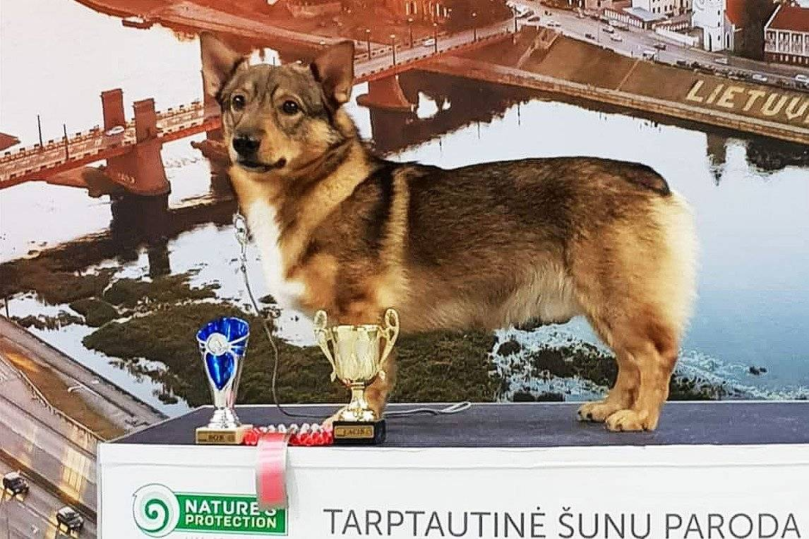Dog on podium