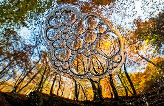 A view from underwater of encircling trees, with the scene reflected in a mass of bubbles.