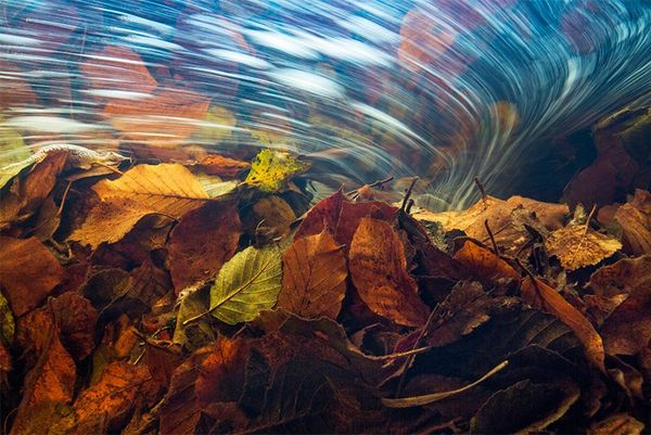 A pile of autumn leaves with flowing water above them.