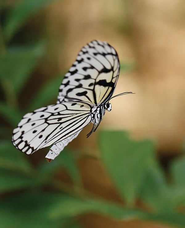 Butterfly Photography