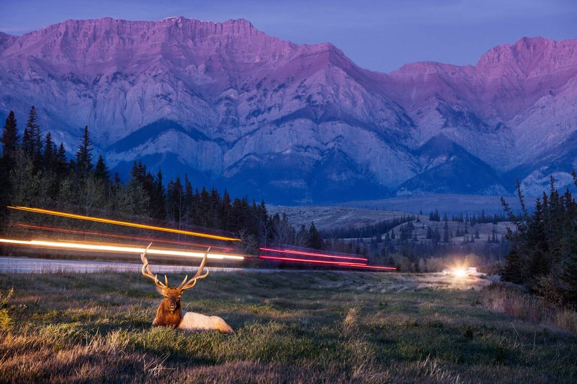 A long-exposure shot of a deer in Jasper National Park, Canada, taken by Canon Ambassador Vladimir Medvedev on a Canon EOS 5D Mark II.