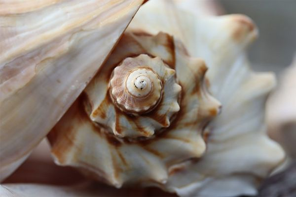 An ultra close-up photo of an intricately-shaped shell, taken on a Canon EOS 250D.