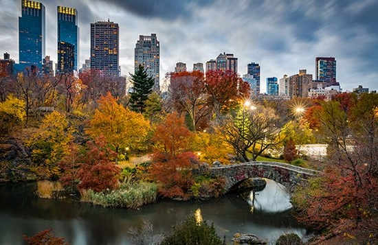 A cityscape filled with autumnal coloured trees.