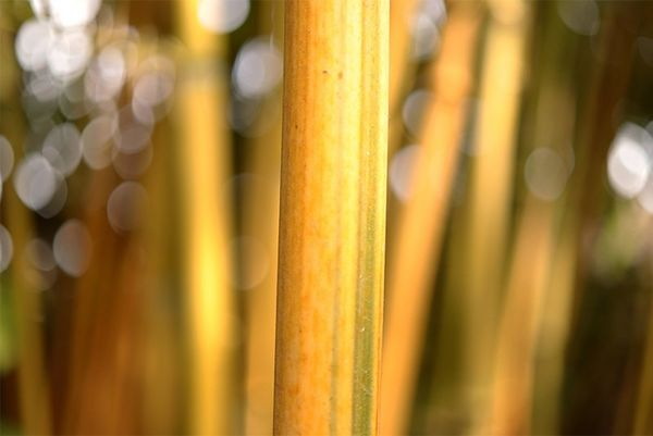 A close-up of a bamboo pole with a blurred background. Taken on a Canon EOS 77D with a Canon EF-S 35mm f/2.8 Macro IS STM lens.